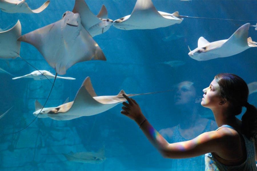 Seaworld-sting-rays-900x600px