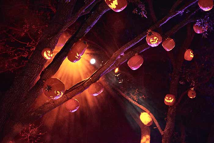 15 Trick R Treat Scare Zone